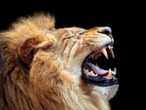 Mercury In Leo:  Helios' Roar