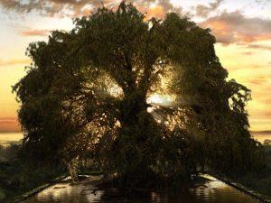 Astrology Aug 23rd – Sep 1st (♍️I): Beneath the Tree